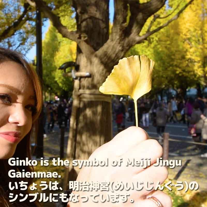 [Easy Japanese]Ginkgo Fetival in Tokyo